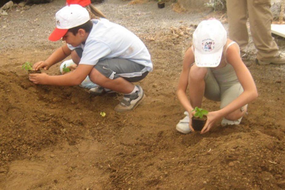 Limonium Canarias - Educación Ambiental - Huerto Escolar