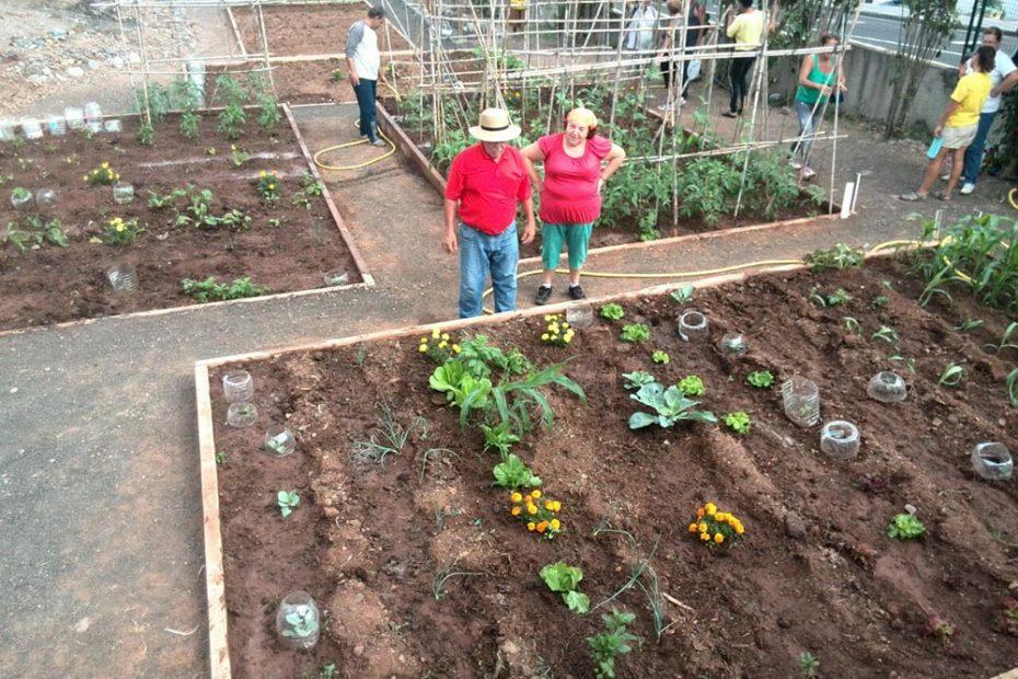 Limonium Canarias - Educación Ambiental - Huerto Urbano